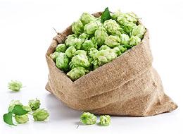 Beer Hops In Burlap Bag