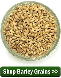 Shop Barley Grains