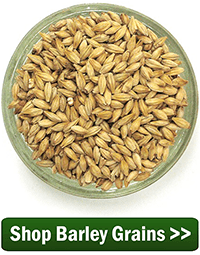 Shop Barley Grains