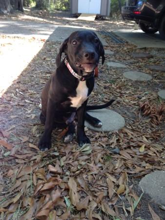 Dog for adoption in Louisiana