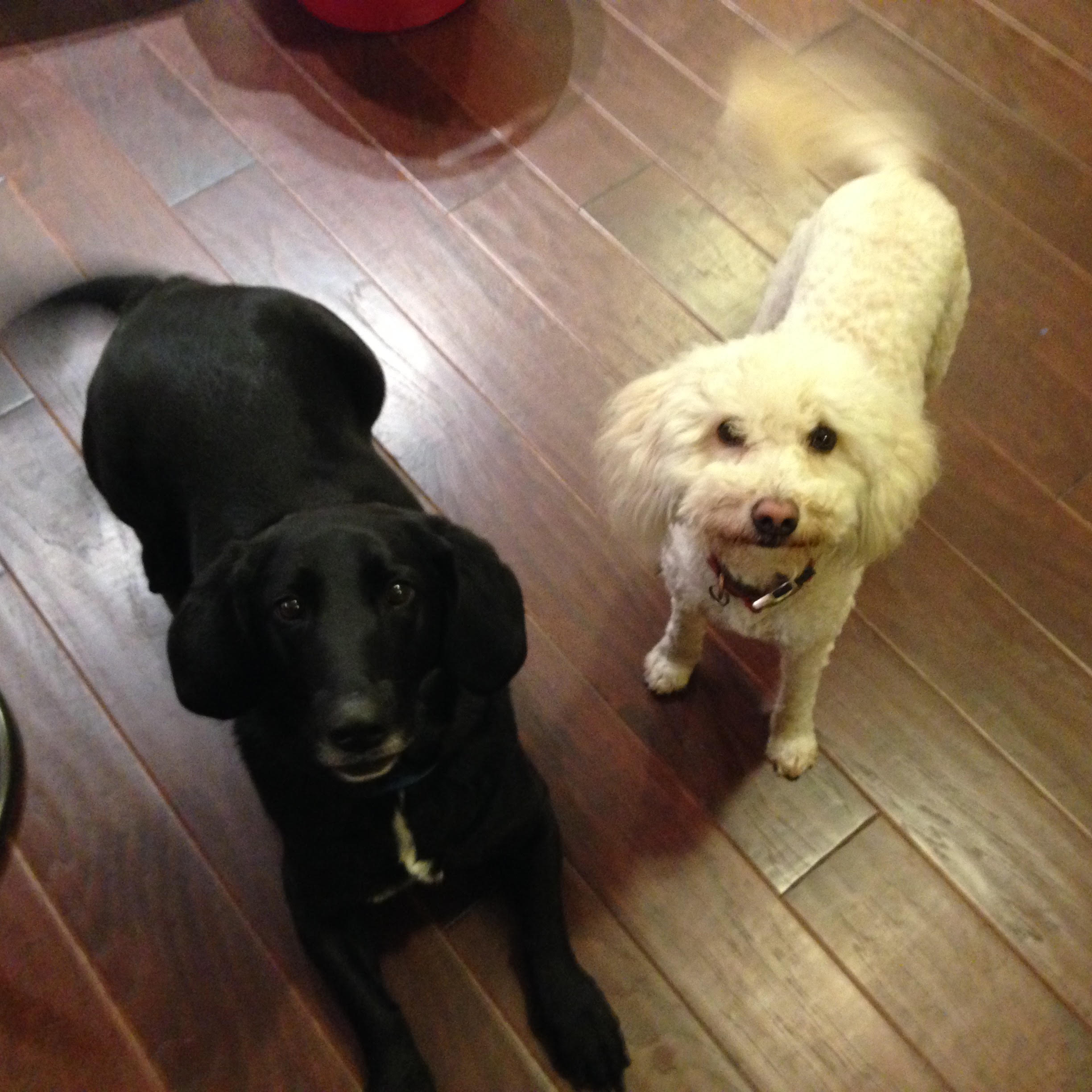 Mixed Dogs, Unbonded – Thatcher & Churchill