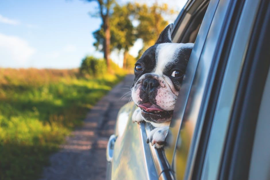 Pet taxi and transportation for your dog or cat.