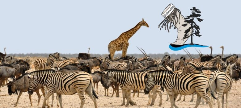 Zebras and Giraffe We are All Connected