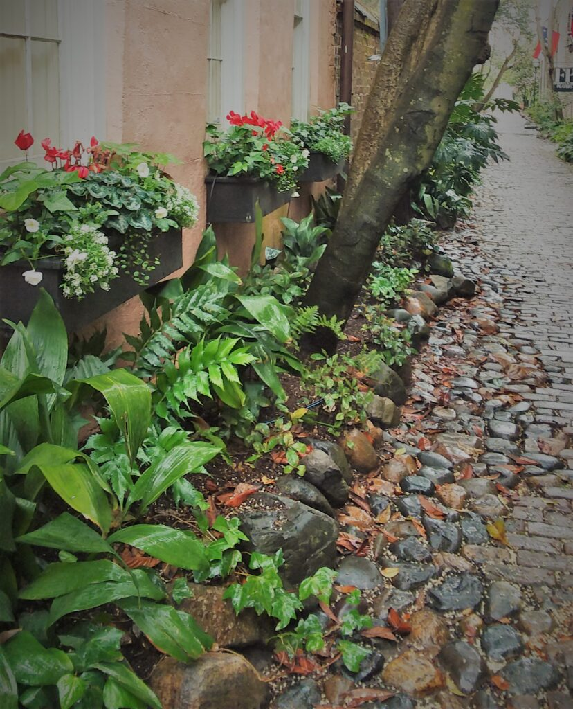 charleston south carolina southern historic travel cobblestone stree alley lush foliage green window boxes with red flowers peach buff plaster building sidewalk solitude