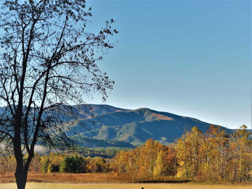 welcome fall all things new nature leaves southern the south adventure solitude wild wilderness wildlife great smoky mountains national park cades cove valley autumn gold blue sky