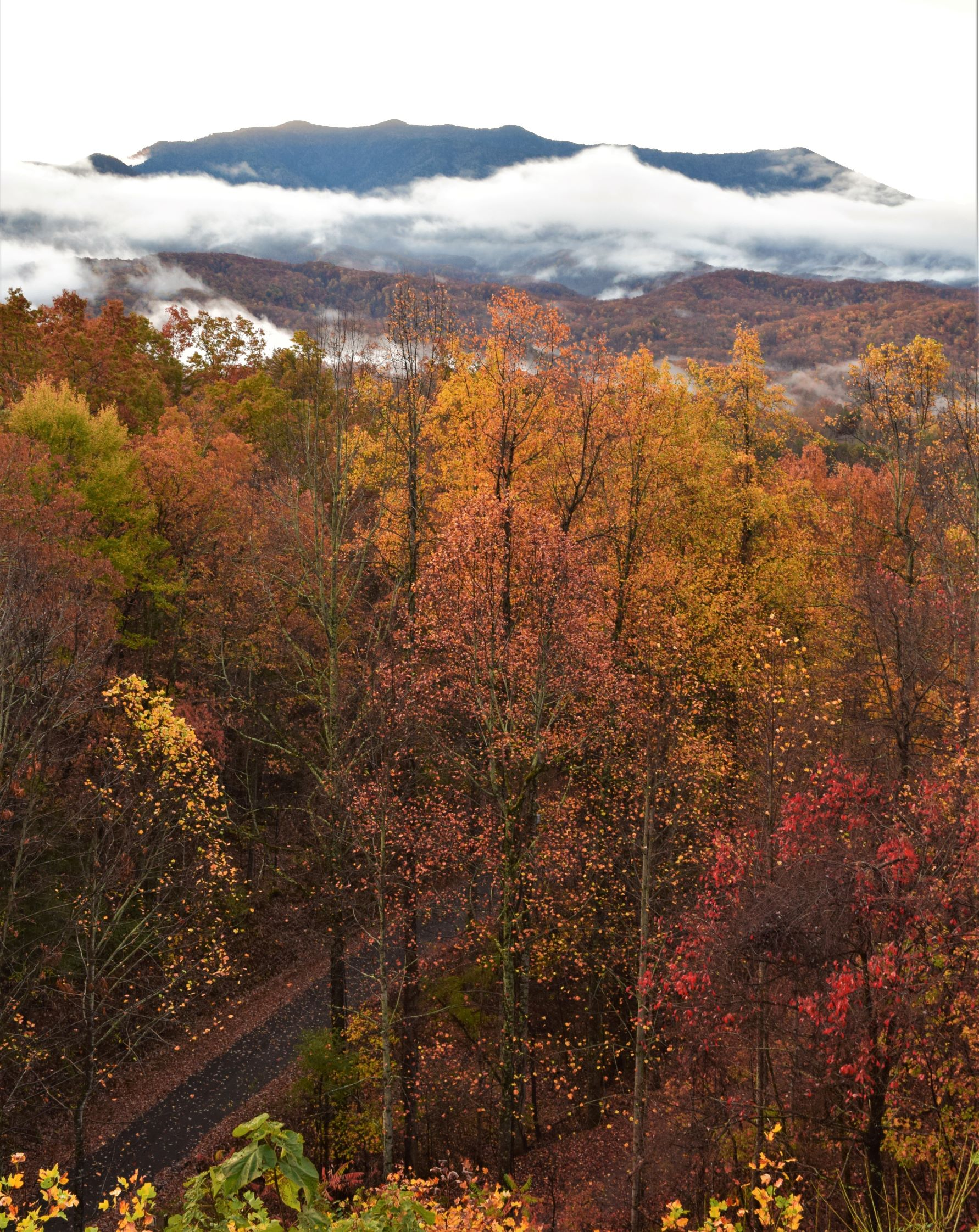 A Fall Drive Through Great Smoky Mountains National Park