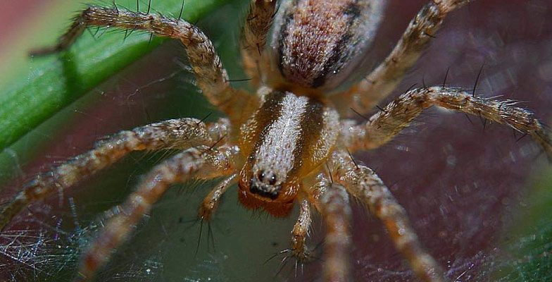 spider-control-by-Pro Trap Animal Removal & Pest Control in Southwestern Ontario