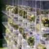 Good Gracious! Events in Los Angeles serves individual servings of greens from a salad wall.