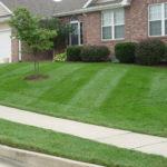 lawn care small yard