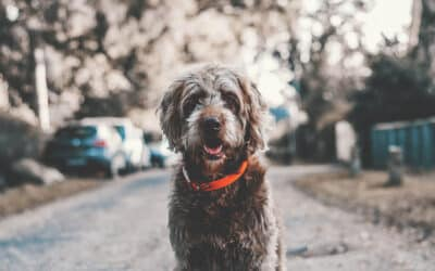 The Benefits of Living at River House's Pet-Friendly Community