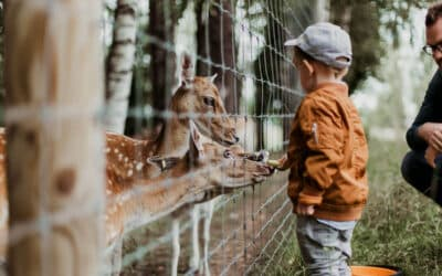 The Santa Ana Zoo: The Perfect Family Outing