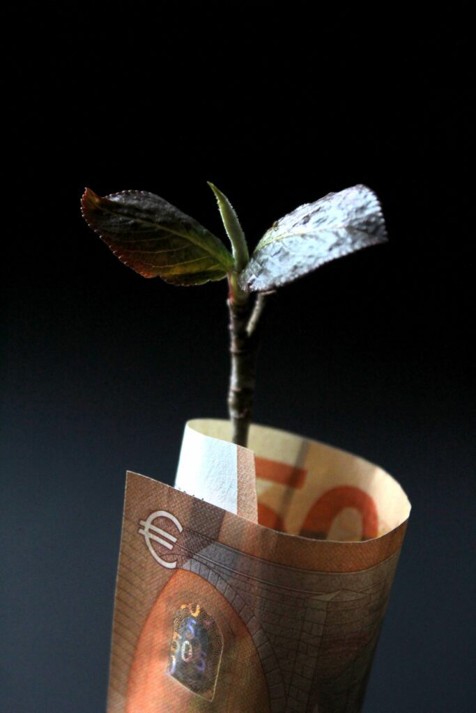 tiny tree growing out of a curled-up 50-euro bill