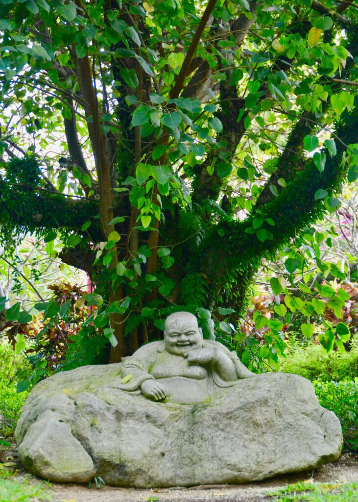 Laughing Buddha sculpture flowing into rock from which it emerges with an old, many-branched green leafy tree behind it.