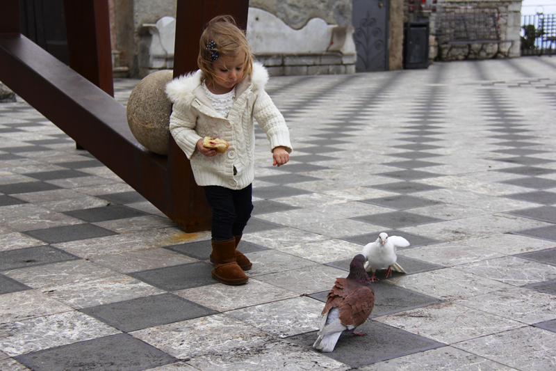 Julia found some pigeons that she became friends with
