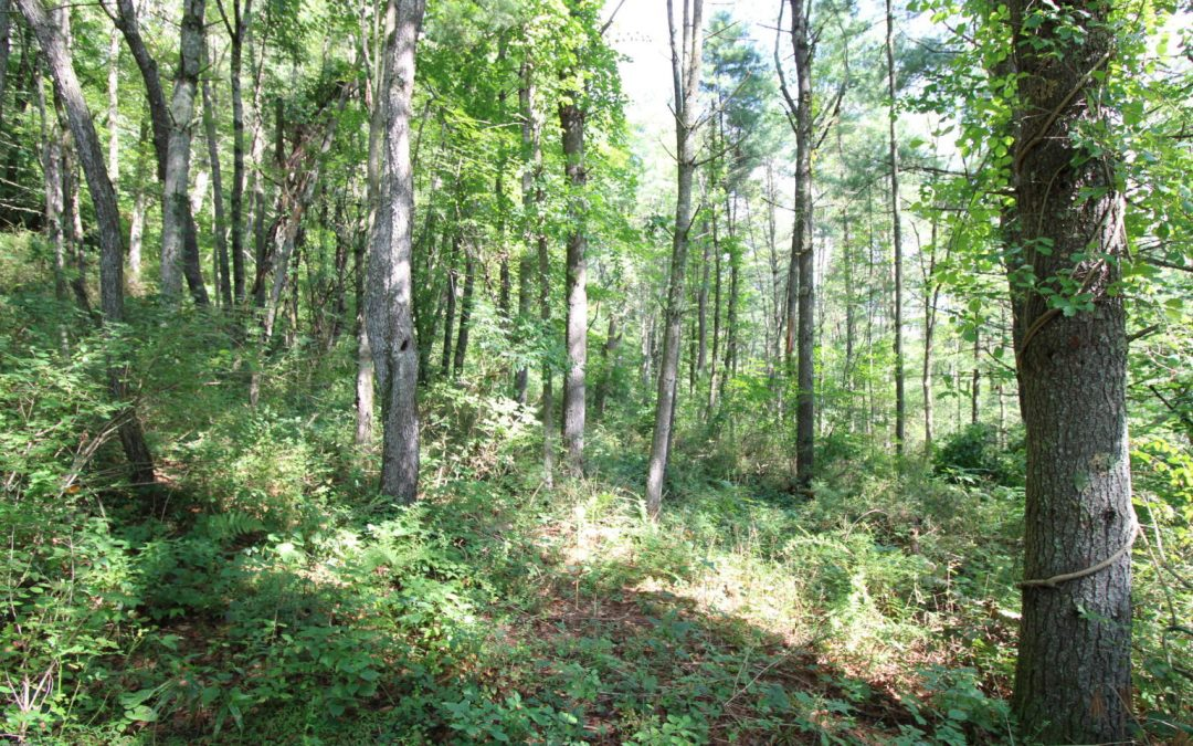 18 Acre Wooded Building Lot