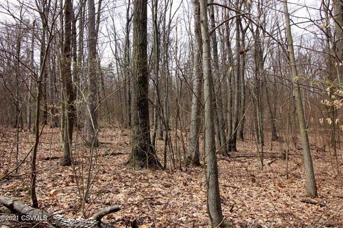 195 Acres Vacant Land