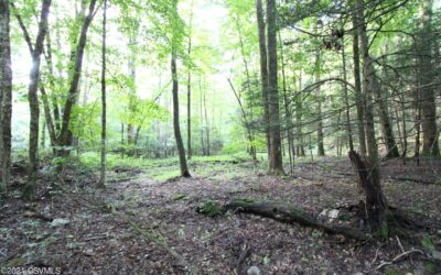 10 Acres of Wooded Land