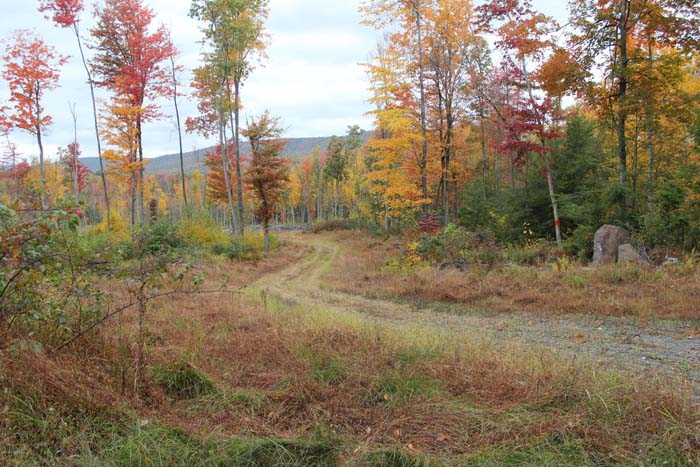 210 Acres, Private Wooded Getaway