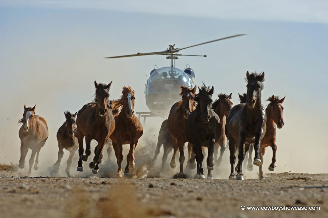why mustangs need our help