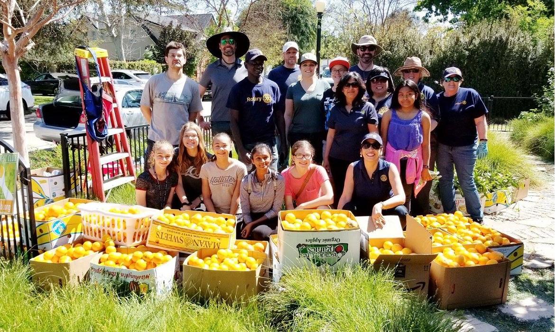 Contest Winner: Harvesting Citrus