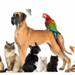 Keeping a Clean House with Pets