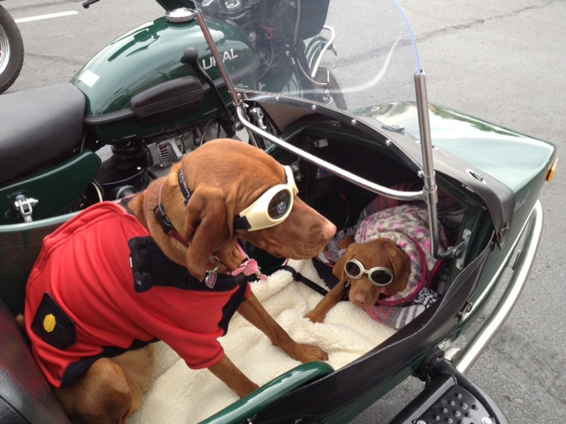 Marty and Zooey going for a ride