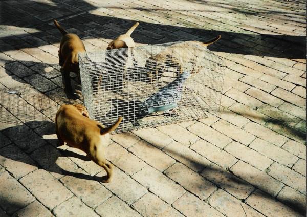 mehagian pups curious about birds
