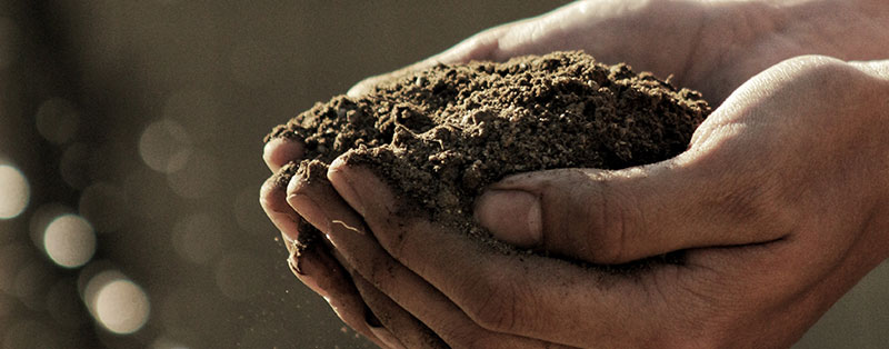 Collect a handful of soil