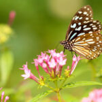 How to create the perfect butterfly garden?