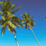 6 Types of Palm Trees that are winter-hardy