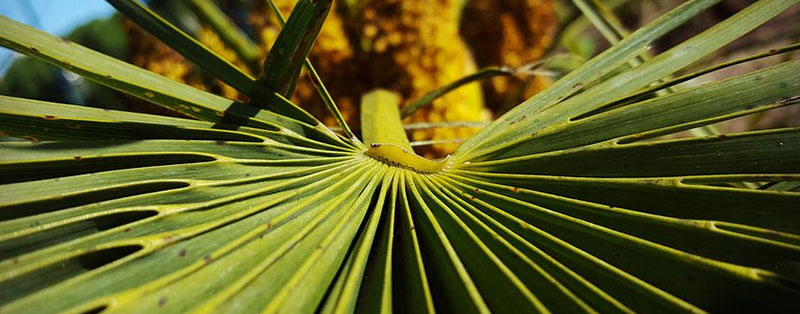 types of palm trees leaves
