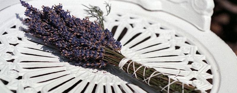 dried lavender plant