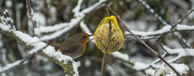 hang fat balls in winter