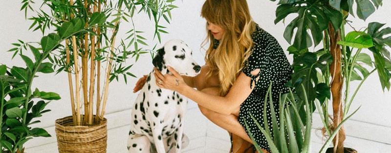 Poisonous houseplants for pets