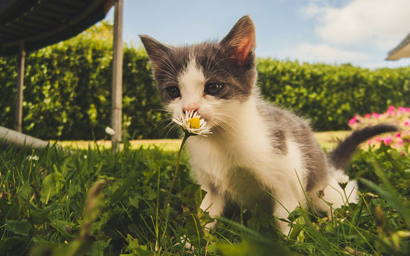 Poisonous plants for dogs and cats, an overview