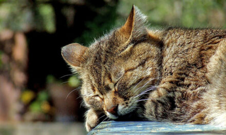 How to keep cats in your garden, 6 ways