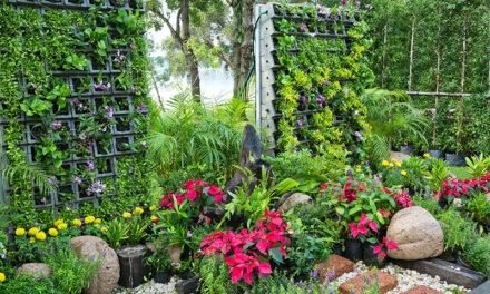 The vertical garden, 4 practical tips