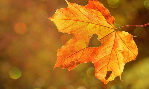 Maple tree, the perfect tree for your garden