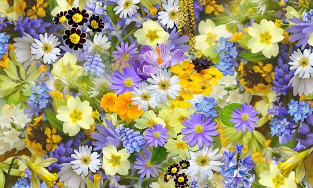 Trendy, delicious, edible flowers!