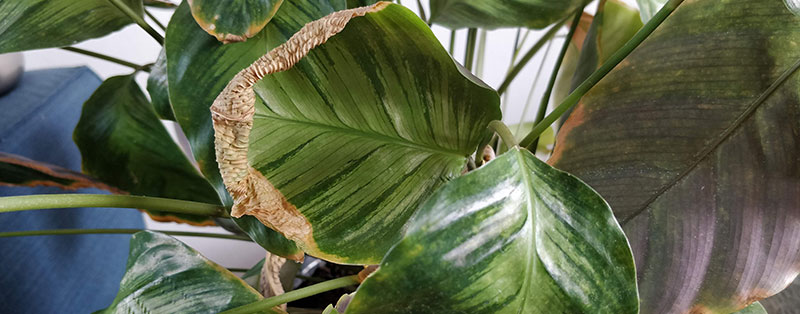 early signs of spider mites