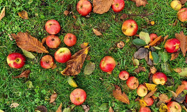 Apple tree varieties, which one do you pick?