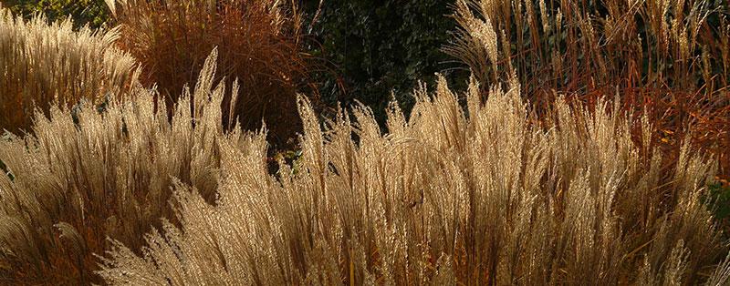 How much ornamental grass per square meter?