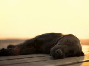 Amazing-sleeping-dog-wallpaper-HD-wallpapers-03032015-441-1024x768