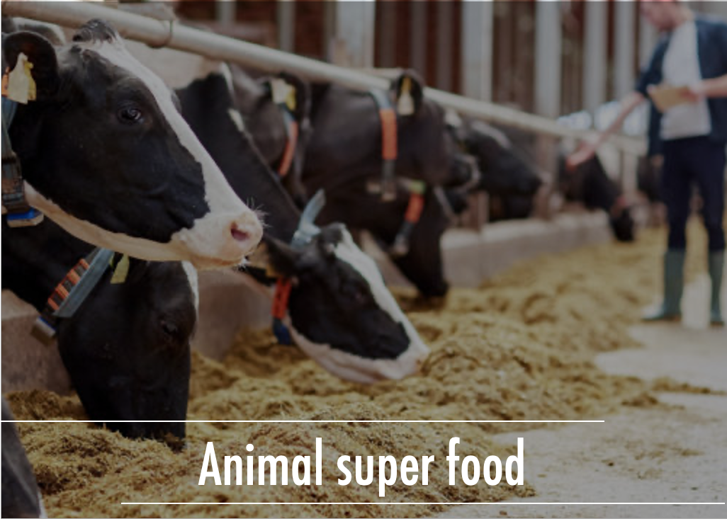 Abimal-super-food