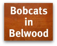 Bobcats in Belwood - Bobcat spotted on Bacigalupi Drive near Belgatos Park in Los Gatos