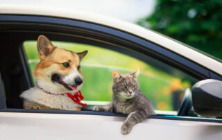 A corgi and a cat relax in the car on the way to their Pet Friendly Trip to New Braunfels.