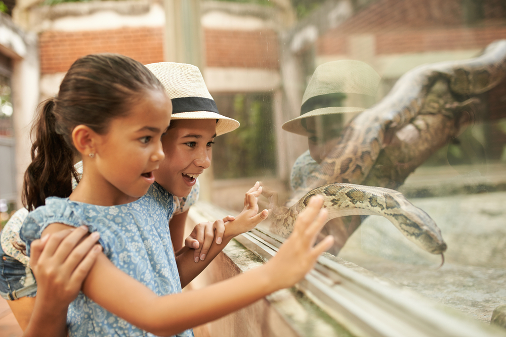 Children press their hand to the glass barrier, as they peer at a snake