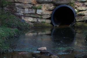 Drain leads to Lake Hollifield. Photo by: Hannah Haggerty