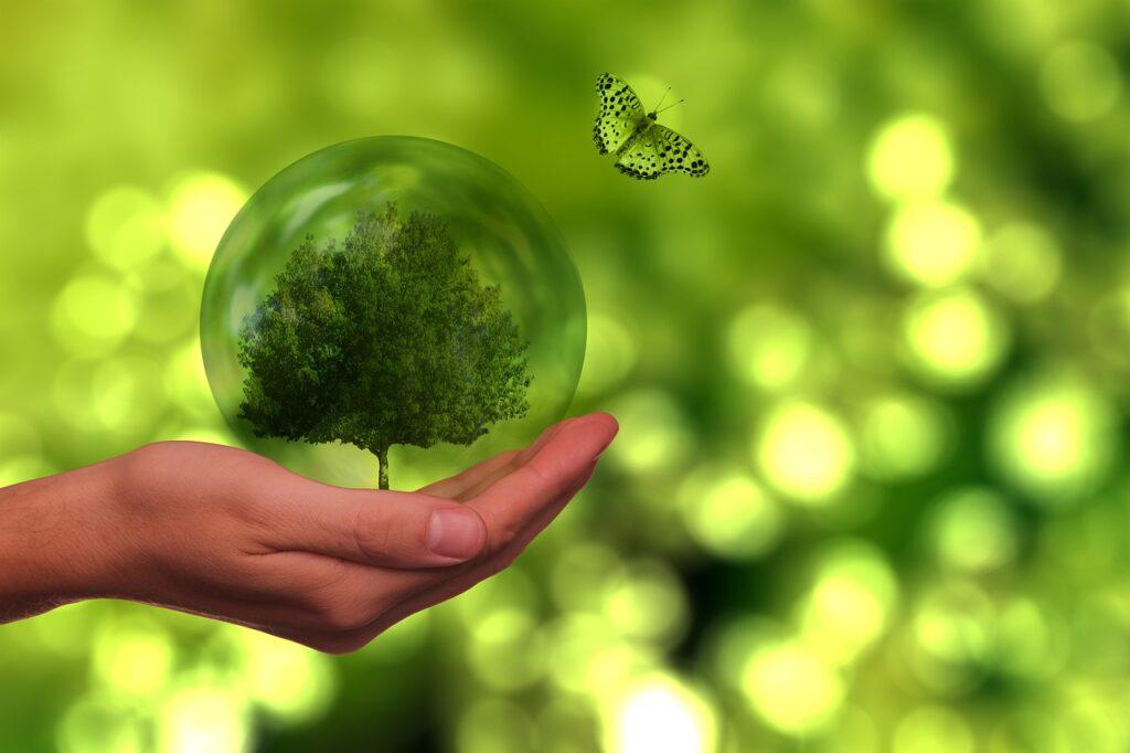 tree, butterfly, globe-5725540.jpg