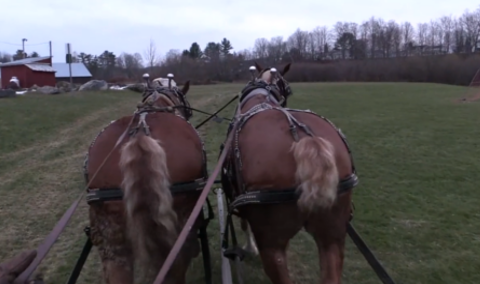 Festival of Lights, 2017 – Horse Drawn Carriage Ride